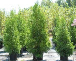 Good Evergreen Trees for Privacy
