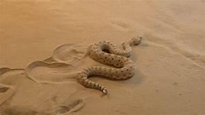 Moving Snake Gif | www.pixshark.com - Images Galleries ...