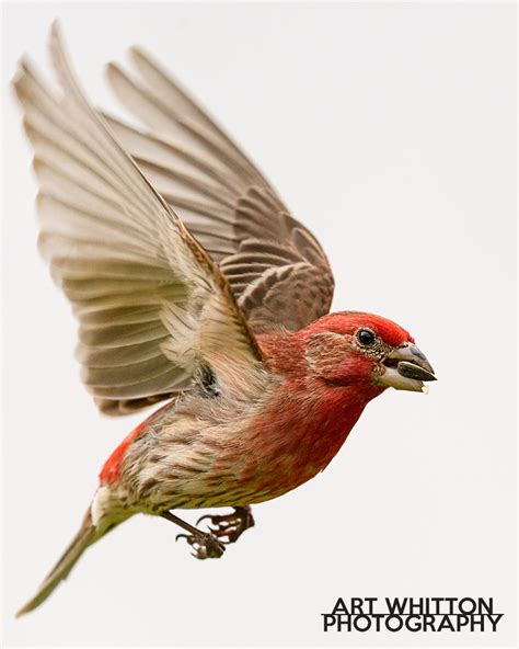 get the shot backyard bird photography