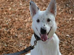 Broward county, About animals and Australian cattle dog on ...