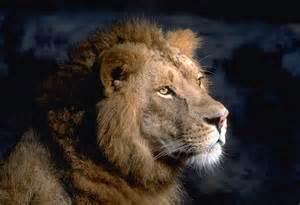 Lion Face Side View