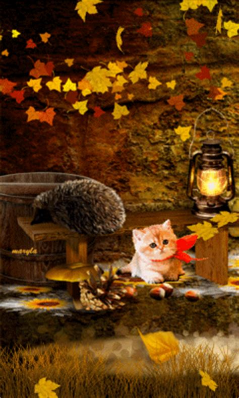 fall kitty pictures   images  facebook