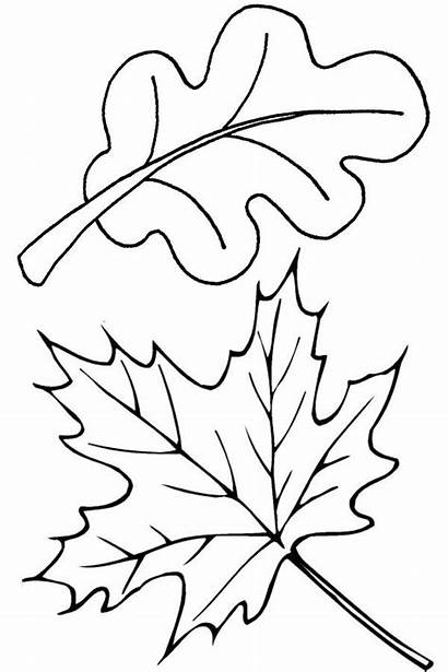 Leaves Coloring Pages Leaf Fall Autumn Oak