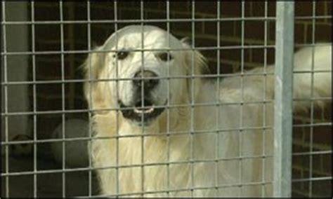 bbc news uk pet passport scheme  include
