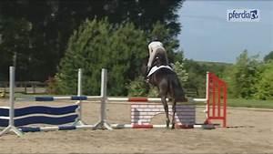Elektroauto Für 4 Jährige : erste springgymnastik f r das 4 j hrige pferd ingrid ~ Lizthompson.info Haus und Dekorationen