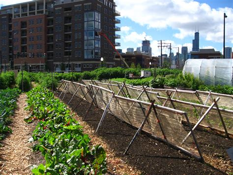 Urban Agriculture-wikipedia