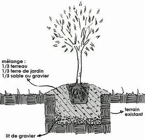 Planter Un Olivier En Pot : planter un olivier gamm vert ~ Dailycaller-alerts.com Idées de Décoration