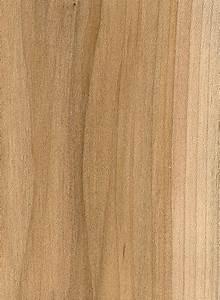 Red Maple The Wood Database - Lumber Identification
