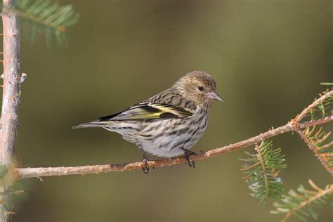 thunder bay field naturalists bird checklist thunder