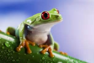 Keeping Frogs as Pets
