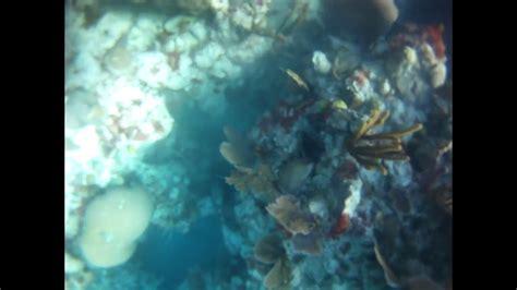 bermuda grouper