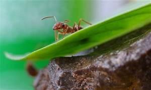 Come eliminare le formiche da orto e giardino Coltivare