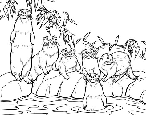 zoo coloring pages  preschoolers illustration