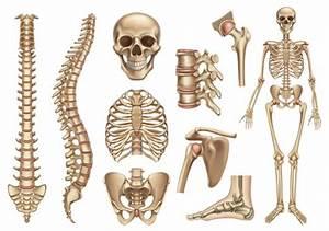 Best Spinal Manipulation Illustrations  Royalty