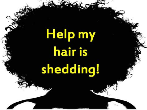 Do Pomskies Shed Hair by Coilyqueens Help My Hair Is Shedding