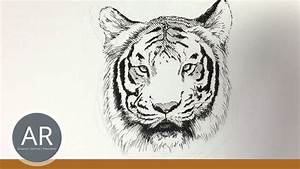 Zeichnen Lernen Mit Bleistift : tier illustrationen tiere zeichnen lernen tiger zeichnen mappenkurs kunst youtube ~ Frokenaadalensverden.com Haus und Dekorationen