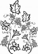 Coloring Ivy Leaf Grape Pages Lego Santa Flower Printable Sheets Nice Wecoloringpage Box sketch template