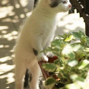 Repulsif Pour Urine Chat : 4 m thodes pour loigner les chats de son potager ooreka ~ Melissatoandfro.com Idées de Décoration
