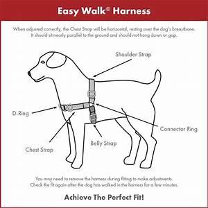 Petsafe Easy Walk Harness Size Chart Premier Easy Walk ...