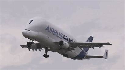 Plane Transport Beluga Airbus Crazy Looking Animated