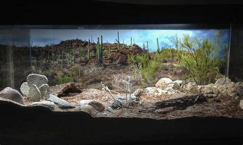 Desert Terrarium Background Desert Tarantula Terrarium Search Tarantula