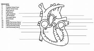 Heart Diagram  U2013 15  Free Printable Word  Excel  Eps  Psd