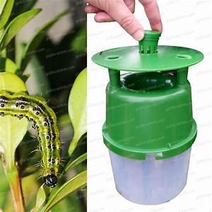 Pyrale Du Buis Traitement Bayer : pi ge pyrale du buis vendu sans capsule pheromone ~ Dailycaller-alerts.com Idées de Décoration