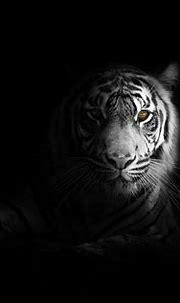 Big Cat Tiger 4k, HD Animals, 4k Wallpapers, Images ...