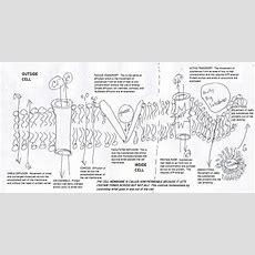 Cell Membrane Diagram Worksheet  Science 7  Plasma Membrane, Cell Membrane, Biology