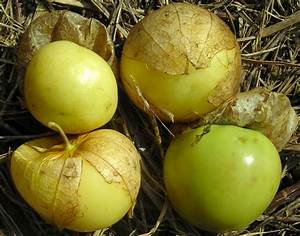 Tomate Verde Tomatillo, 0.09 g : Southern Exposure Seed ...