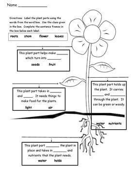 plant parts differentiated instruction tiered