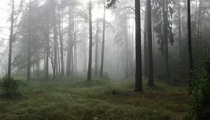 Mysterious foggy morning in the forest