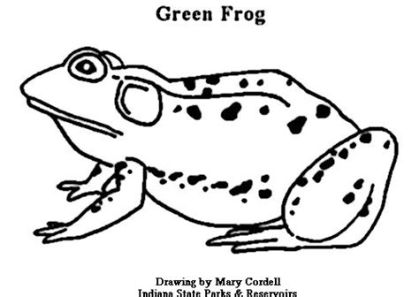 DNR: Coloring Pages Animals