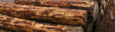 fsc controlled wood fsc international