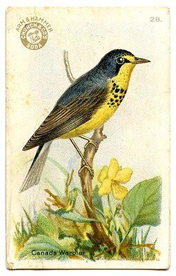 vintage clip art pretty  birds  graphics