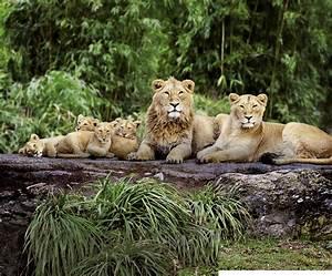Familienjahreskarte Gewinnen Zoo Zrich