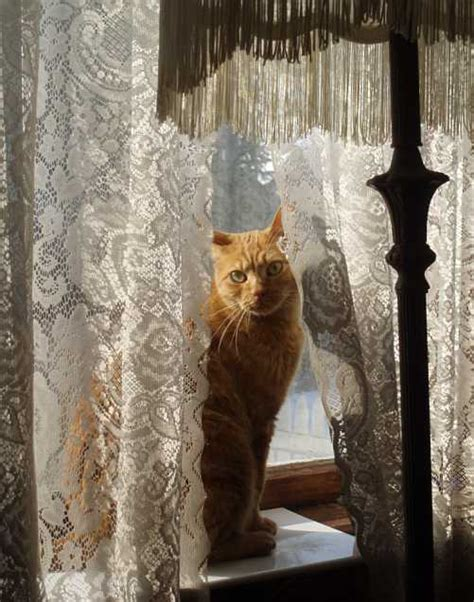 cat window feline foto friday hither and yarn