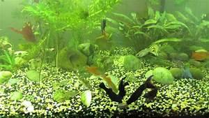 Fische Aquarium Hamburg : aquarium fische f ttern feeding fish aquarium youtube ~ Lizthompson.info Haus und Dekorationen