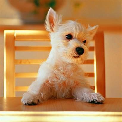 Dog Ipad Wallpapers Puppy Puppies Desktop Ja