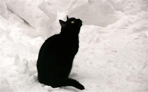 Cats In Snow Wallpaper Wallpapersafari