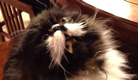 cat brain freeze video