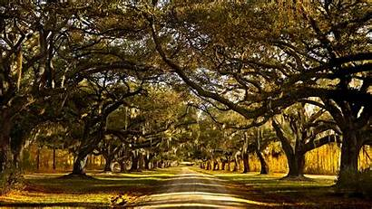 South Carolina Pleasant Moss Spanish Trees North