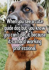 15 best Guide Dog Folder; Quotes, News, info. images on ...