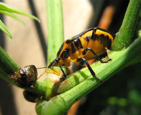 Garden Bug by Garden Bugs Lazy B Farm S