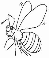 Coloring Fly Pages Insects Printable Insect Bugs Cartoon Getcoloringpages Snail sketch template