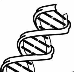Dna 20clipart | Clipart Panda - Free Clipart Images