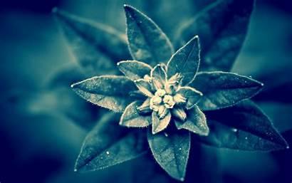 Plant Wallpapers Desktop Macro Backgrounds Background Leaves