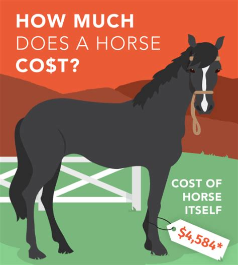 horse cost much does horseclicks far travel average colorado worth