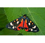 How To Attract Moths Your Garden  The Telegraph