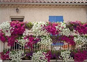 Balkonkästen Bepflanzen Beispiele : new dekoration ideen balkonbepflanzung vorschl ge ~ Lizthompson.info Haus und Dekorationen